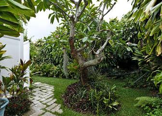 545 Halela Street – Kailua